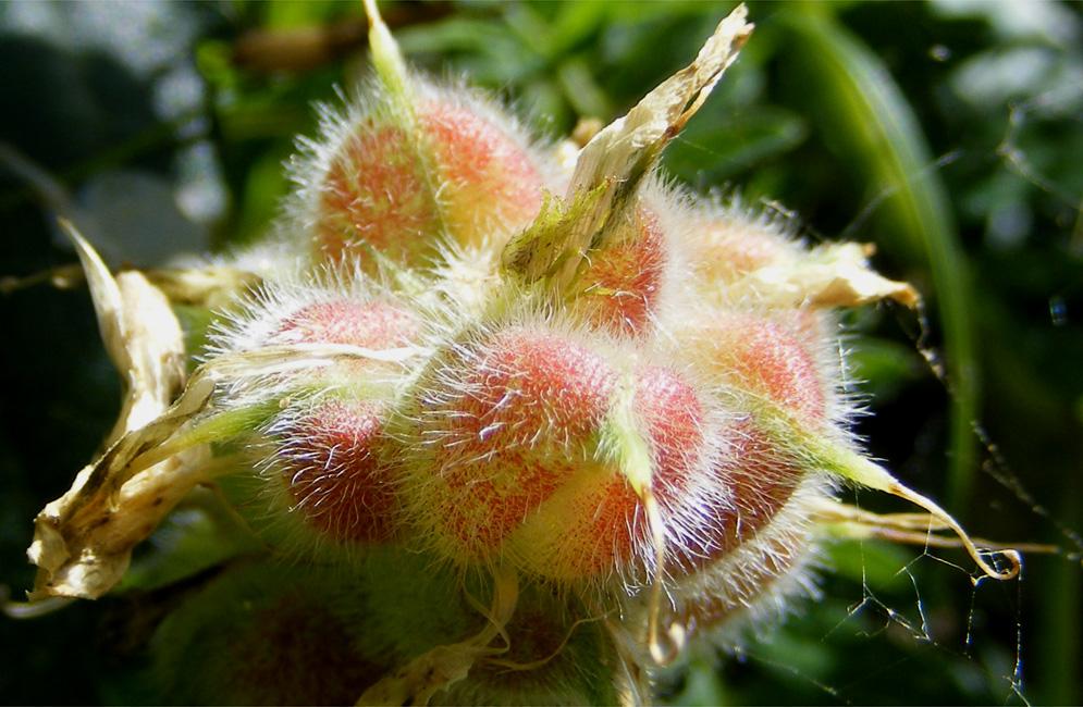 Fotoalbum blumen 1 fiori 1 for Blumen fliegen
