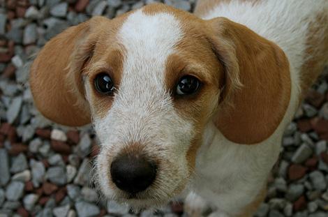 L 39 educazione precoce del cane da seguita for Educazione cane