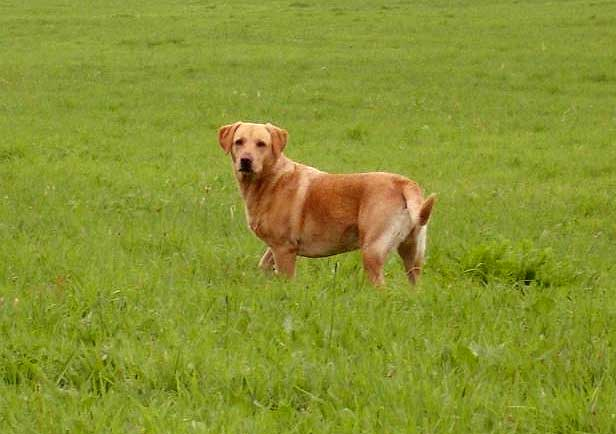 Mein Hund ASS 100 geben? Gesundheit, Medikamente