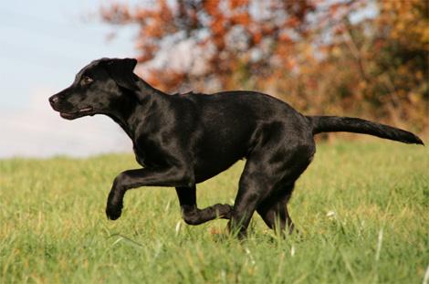 Bracken Dogs Name