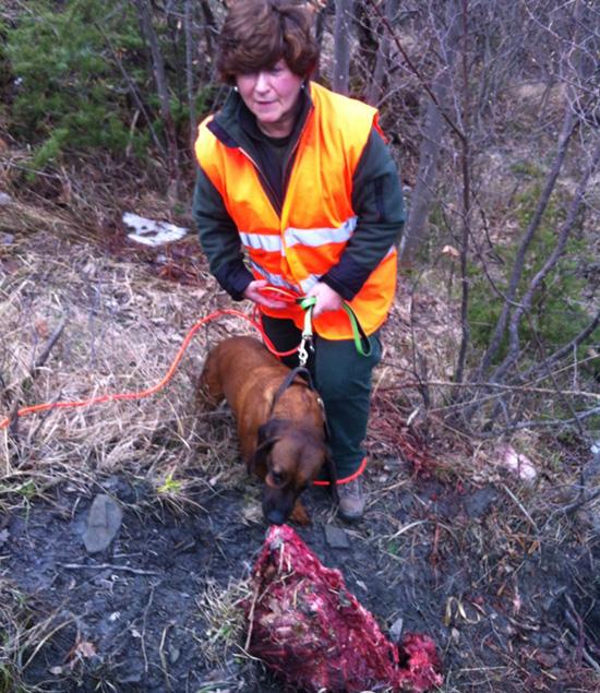 Lupo vs cane domestico for Ardeatina arredamenti di lupi gabriella
